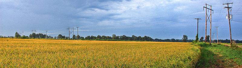panoramic of Mississippi delta