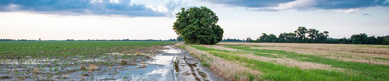 scenic panoramic of Mississippi delta